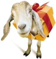 Goat gift